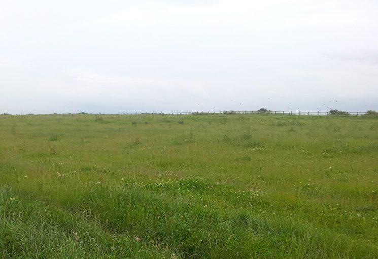 Как бесплатно получить землю под дачный участок?