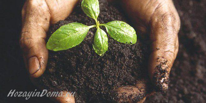 улучшить плодородие почвы