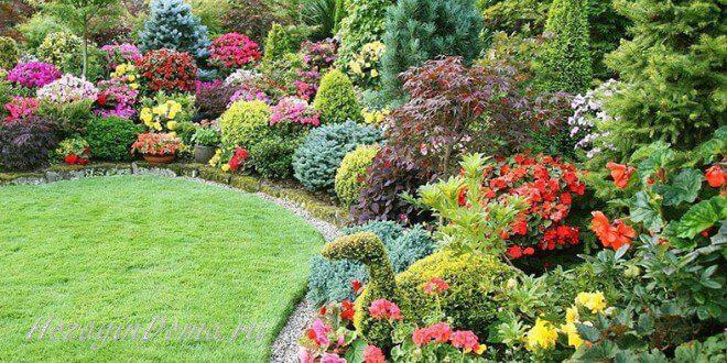 Декоративные кустарники в саду на даче