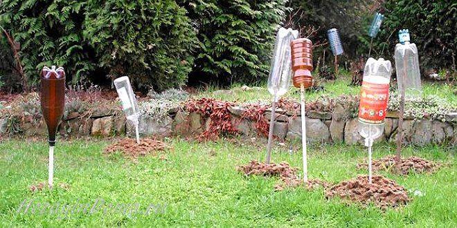 Как избавиться от кротов и защитить свой урожай на участке