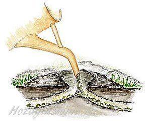 Устранение кротов с помощью ядов