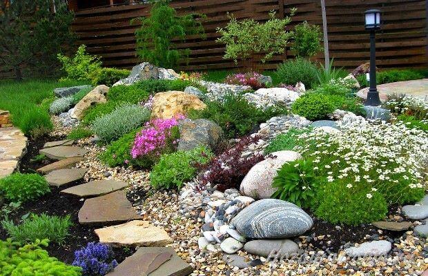 светолюбивые растения на даче