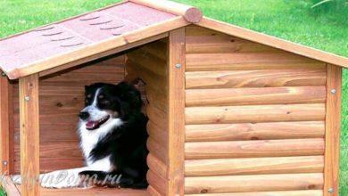 Photo of Будка для собаки своими руками