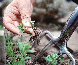 агротехнические приемы