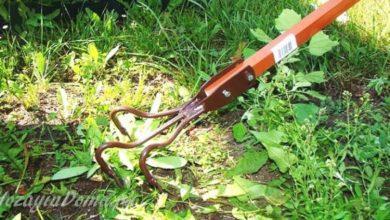 Photo of Как избавиться от сорняков в проходах между грядками