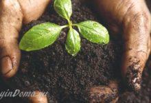Photo of Как улучшить плодородие почвы