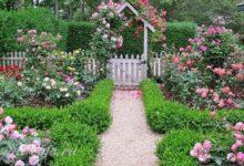 Photo of Черенкование роз — с грядки на лоджию и обратно