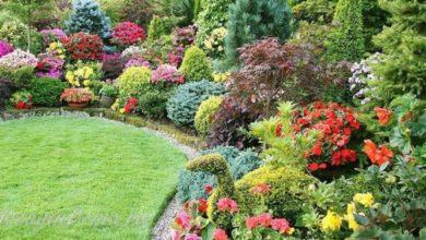 Photo of Декоративные кустарники в саду на даче