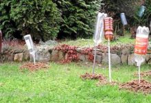 Photo of Как избавиться от кротов и защитить свой урожай на участке