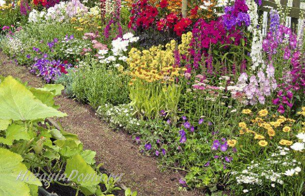 деревенский сад своими руками фото