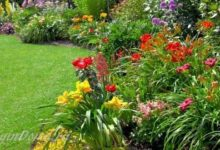 Photo of Как выбрать место для посадки растений в саду на даче?