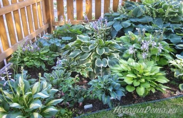растения и цветы в тени