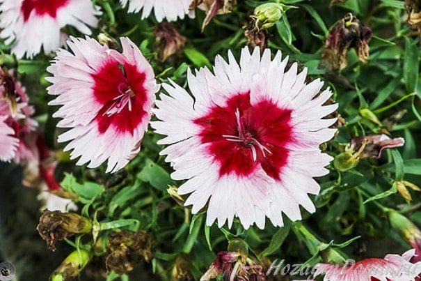Интересные цветы