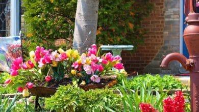 Photo of Какие растения посадить на даче для красоты